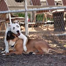 doggie heavin
