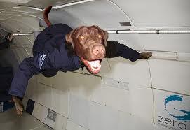 weightless dog